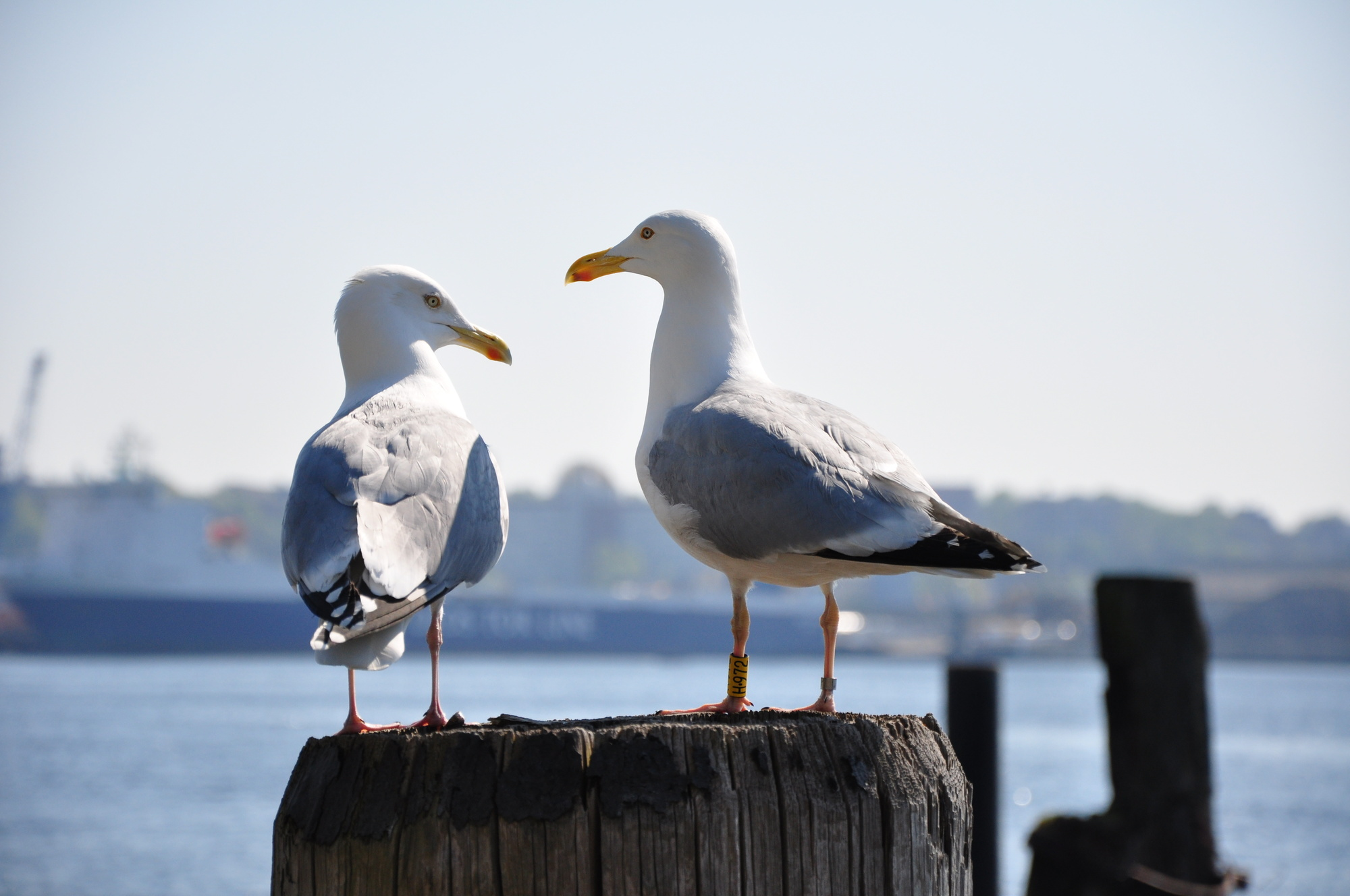 seagull deterrent