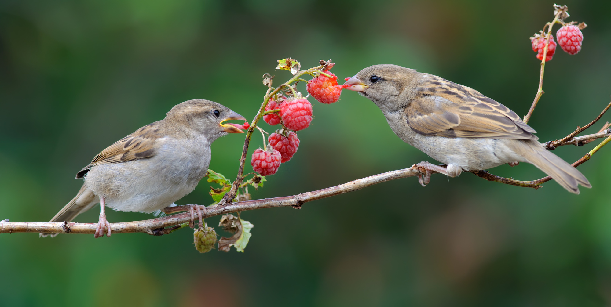 fruit eating birds